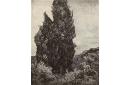 Les cyprès de Van Gogh