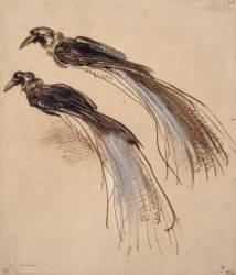 Deux études pour un oiseau de paradis (Rembrandt Harmensz van Rijn) - Muzeo.com