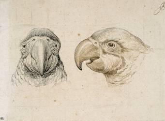 Deux têtes de perroquets (Le Brun Charles) - Muzeo.com