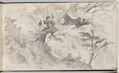Etude d'arbre dans un paysage pentu (Delacroix Eugène) - Muzeo.com