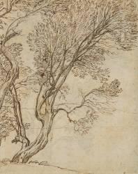 Etude de deux arbres grêles (Le Lorrain Claude) - Muzeo.com