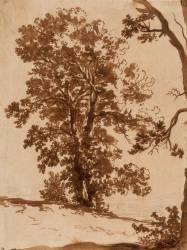 Etude de paysage : étude d'arbres (Poussin Nicolas) - Muzeo.com