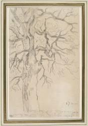 Etude d'un chêne (Delacroix Eugène) - Muzeo.com
