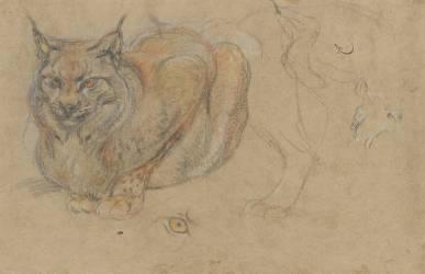 Etude d'un lynx, de face (Boel Pieter) - Muzeo.com