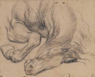 Etude partielle d'un cheval (Le Brun Charles) - Muzeo.com