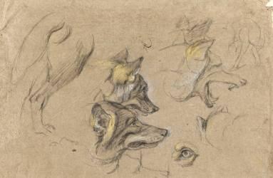 Etudes de têtes de loups et de détails du corps (Boel Pieter) - Muzeo.com