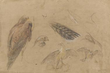 Etudes d'oiseaux de proie (Boel Pieter) - Muzeo.com