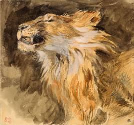 Tête de lion rugissant (Delacroix Eugène) - Muzeo.com