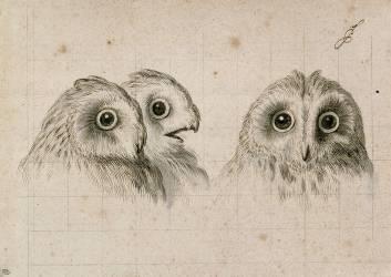 Trois têtes d'hommes en relation avec le chat-huant (Charles Le Brun) - Muzeo.com