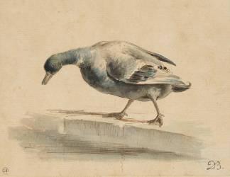 Un canard au bord d'un bassin (Boissieu Jean-Jacques de) - Muzeo.com