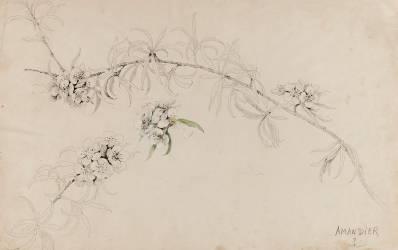 Amandier (Gallé Emile (atelier de)) - Muzeo.com
