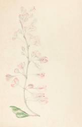 Branche de cerisier en fleurs (Gallé Emile) - Muzeo.com