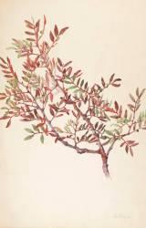 Branche de lentisque (Gallé Emile) - Muzeo.com