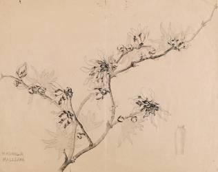 Branche de magnolia en fleurs pour un vase haut à collerette (Gallé Emile) - Muzeo.com
