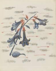 Campanules (Hesteaux Louis) - Muzeo.com