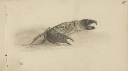 Carnet : crabe (Bonnat Léon Joseph Florentin) - Muzeo.com