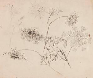 Ciguë (Gallé Emile) - Muzeo.com