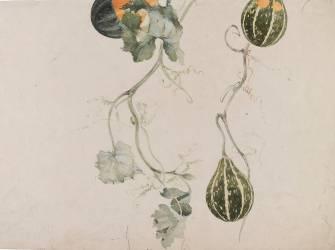 Coloquinte (cucurbitacées) - Etude de motif pied de lampe (Gallé Emile (atelier de)) - Muzeo.com