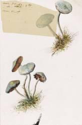 Deux touffes de champignons (Gallé Emile) - Muzeo.com