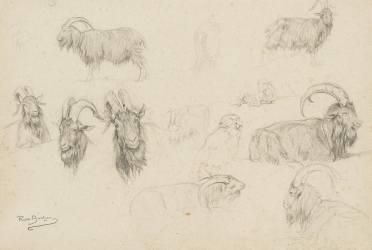 Dix études de chèvres, un mouton, un perroquet (Bonheur Rosa (dit), Bonheur...) - Muzeo.com