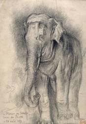 Eléphant sur le vif (Gustave Moreau) - Muzeo.com