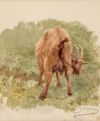 Etude de chèvre (Bonheur Rosa) - Muzeo.com