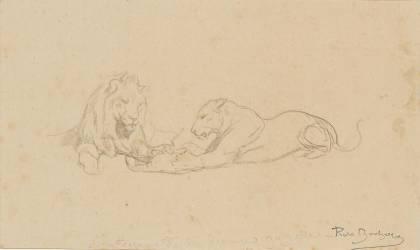 Etude de lion et lionne (Bonheur Rosa (dit), Bonheur...) - Muzeo.com