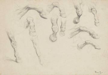 Onze études de jambes de cheval (Bonheur Rosa (dit), Bonheur...) - Muzeo.com