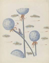 Pissenlits et grenouilles (Hesteaux Louis) - Muzeo.com