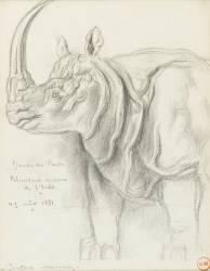 Rhinocéros (Moreau Gustave) - Muzeo.com