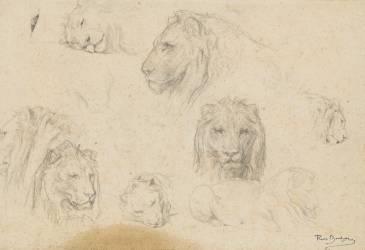 Sept études de têtes de lion, et croquis d'un lion couché (Bonheur Rosa (dit), Bonheur...) - Muzeo.com