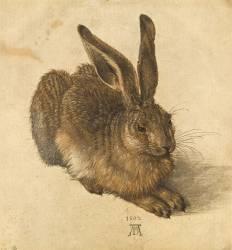Lièvre couché (Dürer Albrecht) - Muzeo.com