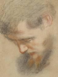 Tête d'homme barbu, de profil, penchée, regardant vers le bas (Barocci Frederico) - Muzeo.com