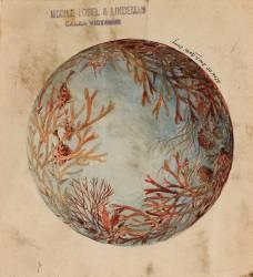 Décor circulaire de coraux, coquillages et poissons (anonyme) - Muzeo.com