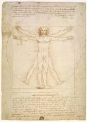 Human proportions, 1490, according to Vitruvius (Vitruvian Man ; Uomo di Vitruvio ; Vitruvian Man) (Léonard de Vinci) - Muzeo.com