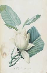 Description des plantes rares que l'on cultive à Navarre et à Malmaison (Redouté Pierre Joseph) - Muzeo.com