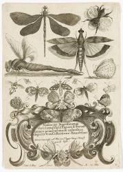 Planche d'insectes (Henry Le Roy) - Muzeo.com