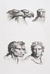Planches 13 a et 13 b : trois têtes d'aigle et trois têtes d'hommes en relation avec l'aigle (Le Brun Charles) - Muzeo.com