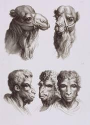 Planches 17 a et 17 b : deux têtes de chameaux et trois têtes d'hommes en relation avec le chameau (Le Brun Charles) - Muzeo.com
