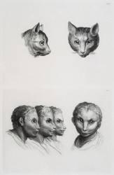 Planches 18 a et 18 b : deux têtes de chats et trois têtes d'hommes en relation avec le chats (Le Brun Charles) - Muzeo.com