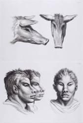 Planches 22 a et 22 b : deux têtes de cochon et trois têtes d'hommes en relation avec le cochon (Le Brun Charles) - Muzeo.com