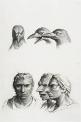 Planches 23 a et 23 b : trois têtes de corbeaux et trois têtes d'hommes en relation avec le corbeaux (Le Brun Charles) - Muzeo.com