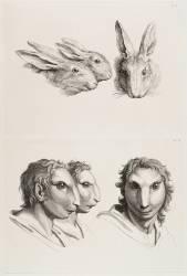 Planches 25 a et 25 b : trois têtes de lièvres et trois têtes d'hommes en relation avec le lièvre (Le Brun Charles) - Muzeo.com