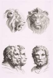 Planches 26 a et 26 b : deux têtes de lions et trois têtes d'hommes en relation avec le lion (Le Brun Charles) - Muzeo.com