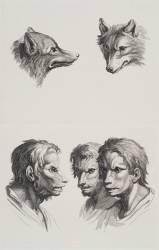 Planches 27 a et 27 b : deux têtes de loups et trois têtes d'hommes en relation avec le loups (Le Brun Charles) - Muzeo.com