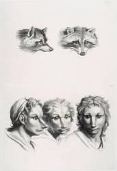 Planches 31 a et 31 b : deux têtes de renard et trois têtes d'hommes en relation avec le renard (Le Brun Charles) - Muzeo.com