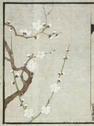 Meika jûyû (Shiseiho) - Muzeo.com