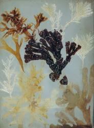 Photogenic Drawings (Talbot William Henry Fox) - Muzeo.com