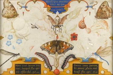 Allégorie de la brièveté de la vie (Hoefnagel Georg) - Muzeo.com