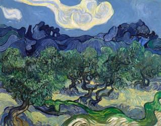 The Olive Trees (Van Gogh Vincent) - Muzeo.com